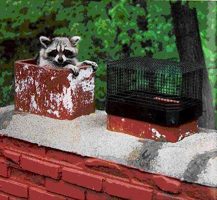 caps prevent animals in chimney